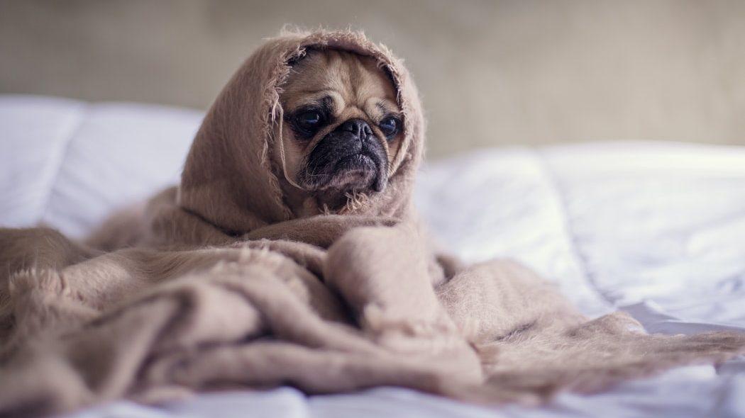 カバーをかぶった犬