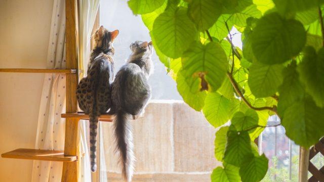 キャットタワーと2匹の猫