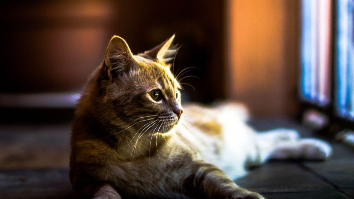 猫ベッドは猫お気に入りの場所に