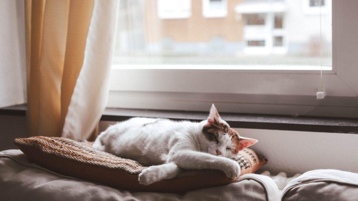 人気のおすすめ猫ベッド