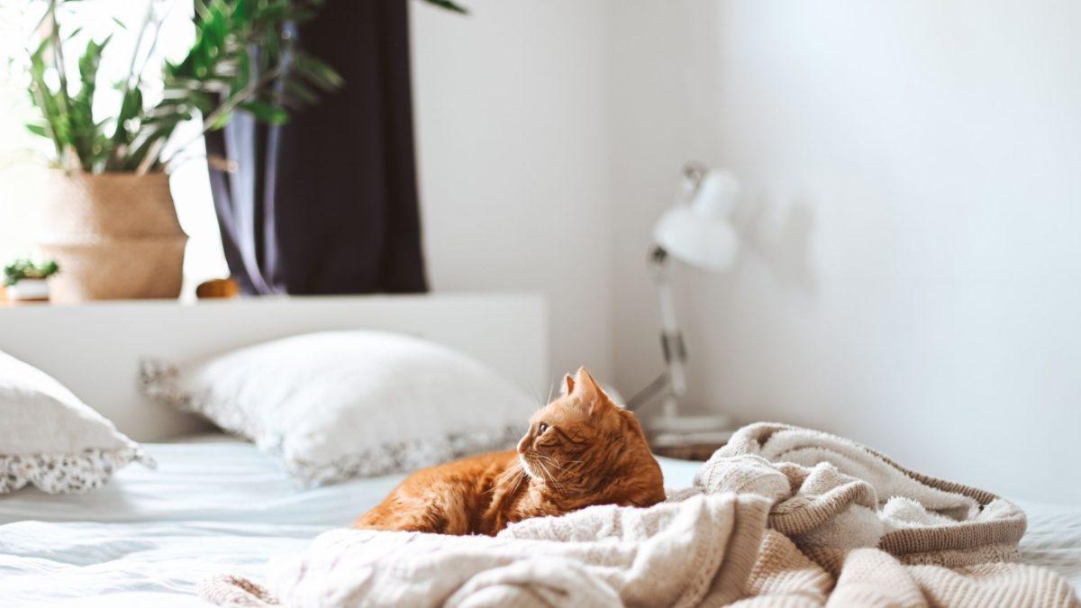 自然素材の猫ベッド