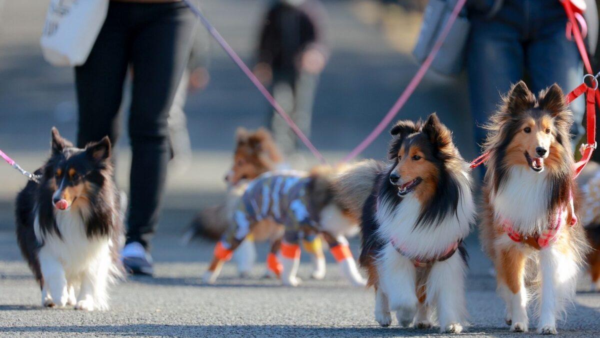 おしゃれな犬用キャリーバッグでお散歩