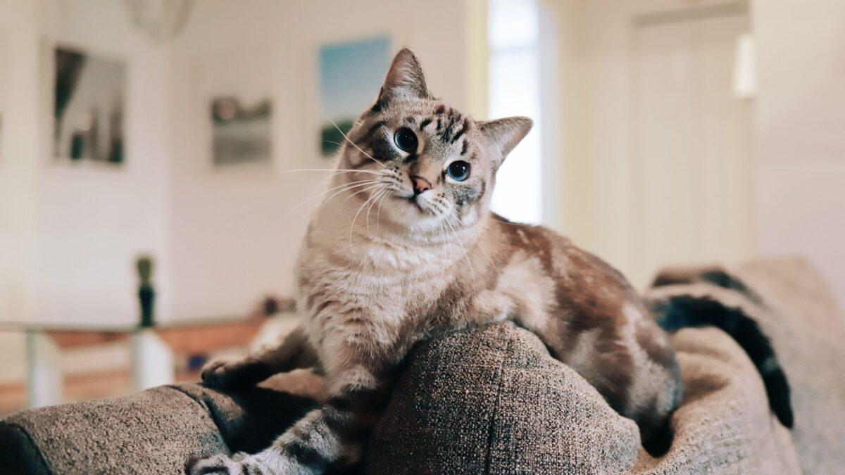 おしゃれなファミリールームでくつろぐ猫
