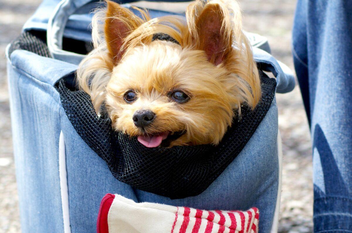 ペット用キャリーバッグは外出時の必需品
