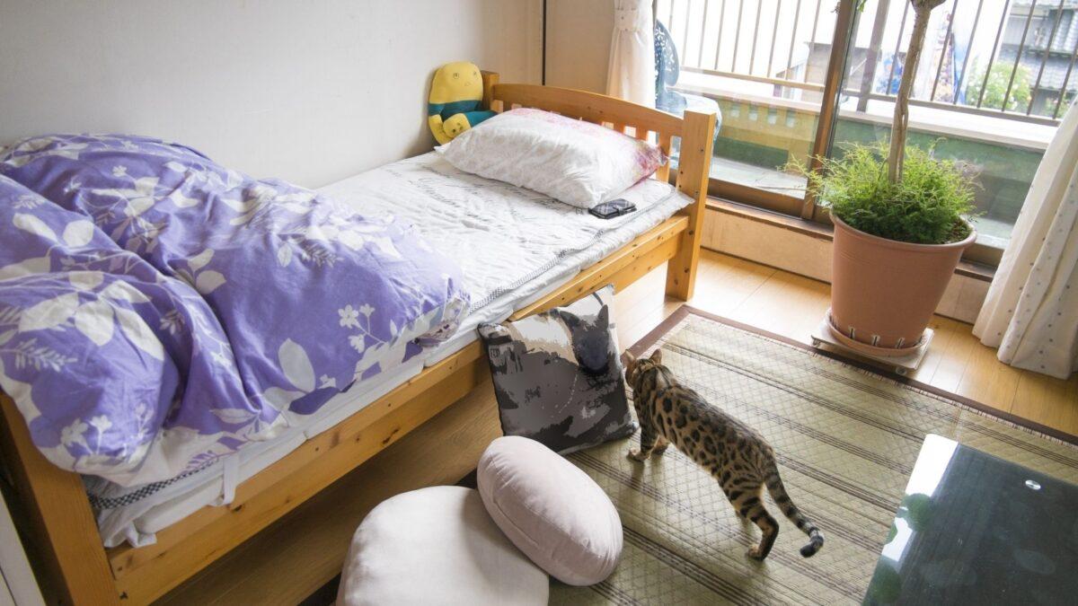 一人暮らしの猫部屋レイアウト